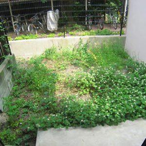 Before:メンテナンスコスト削減!外観植栽を植替え、砂岩石でデザイン性もUP!